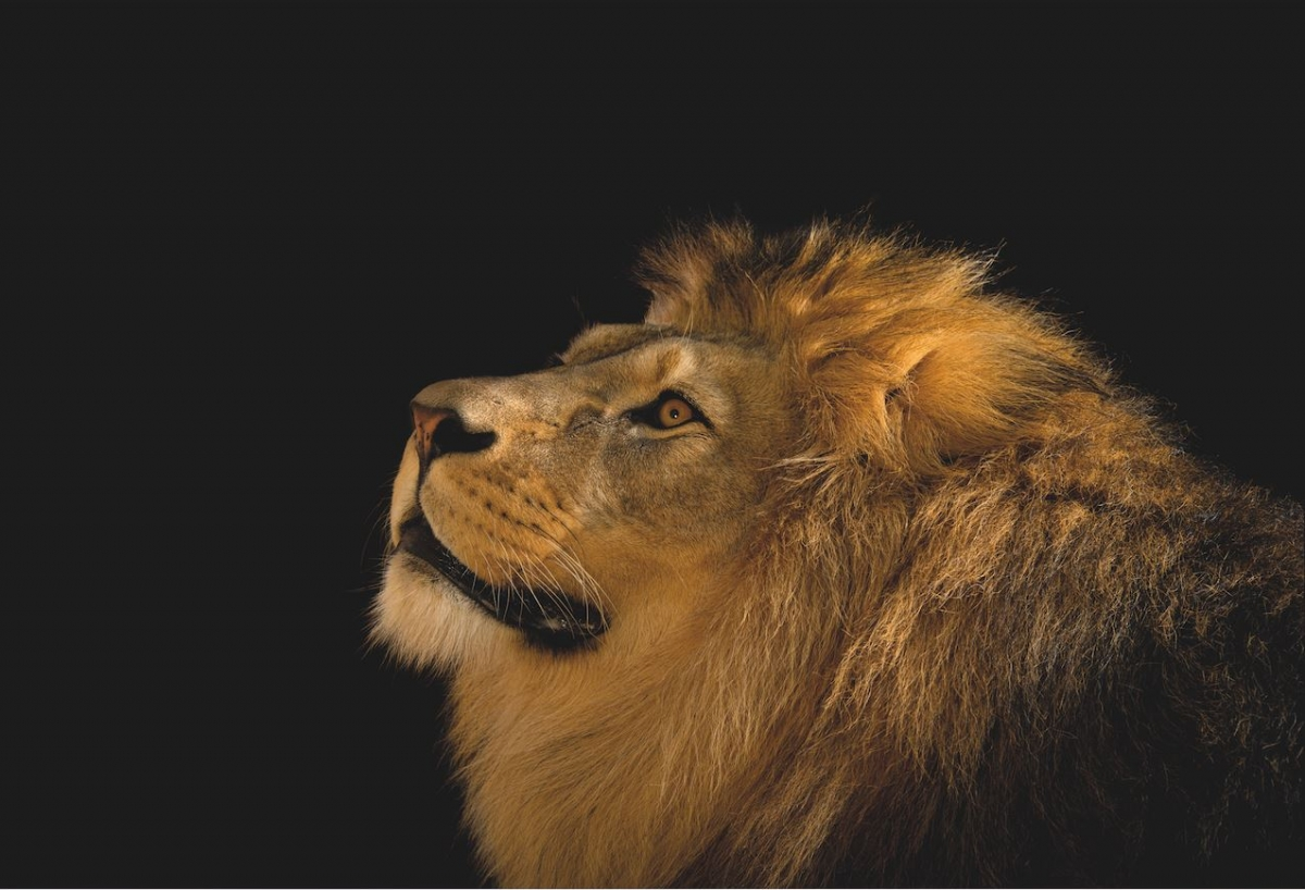 Joel Sartore - Photo Ark